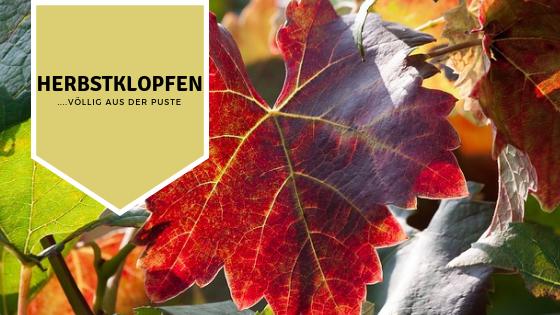 Herbstklopfen völlig aus der Puste Barfusswinzer Schreiber